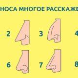 форма вашего носа