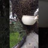 поведение пчёл