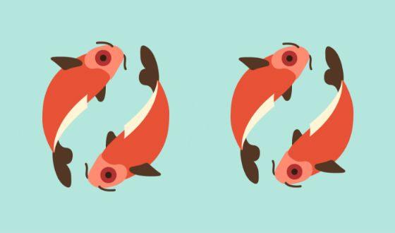 мужчина Рыбы женщина Рыбы