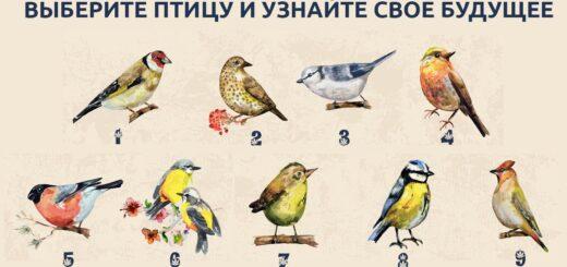 психологический тест с птицами